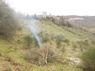 vertine il crepitare del fuoco con le ginestre (10)