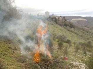 vertine il crepitare del fuoco con le ginestre (12)