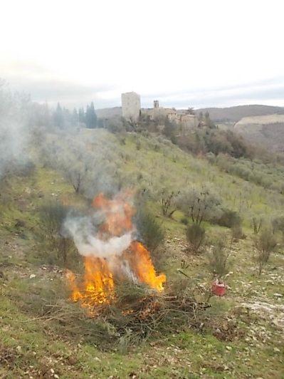vertine il crepitare del fuoco con le ginestre (13)
