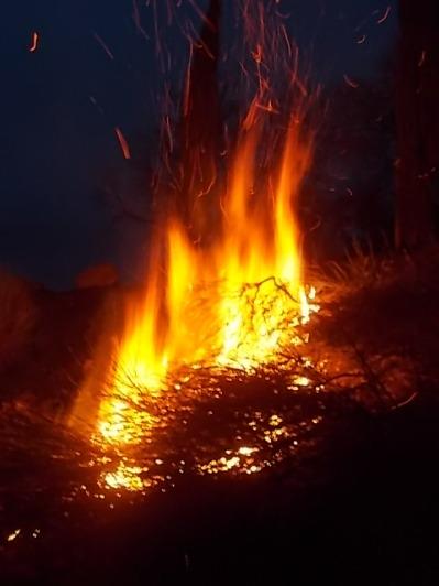 vertine il crepitare del fuoco con le ginestre (16)
