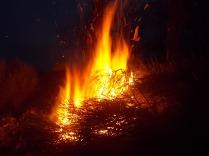 vertine il crepitare del fuoco con le ginestre (17)