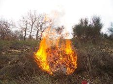 vertine il crepitare del fuoco con le ginestre (6)
