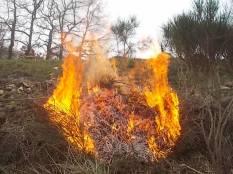 vertine il crepitare del fuoco con le ginestre (7)