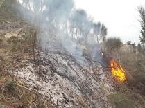 vertine il crepitare del fuoco con le ginestre (8)