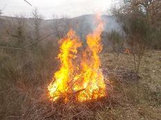 vertine il crepitare del fuoco con le ginestre (9)
