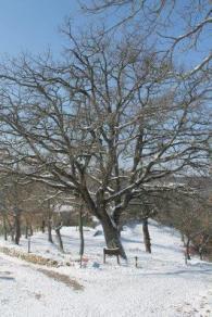 vertine neve 26 febbraio 2018 (44)