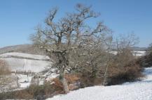 vertine neve 26 febbraio 2018 (46)