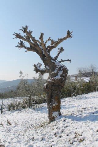 vertine neve 26 febbraio 2018 (47)