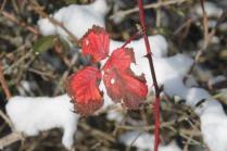 vertine neve 26 febbraio 2018 (61)
