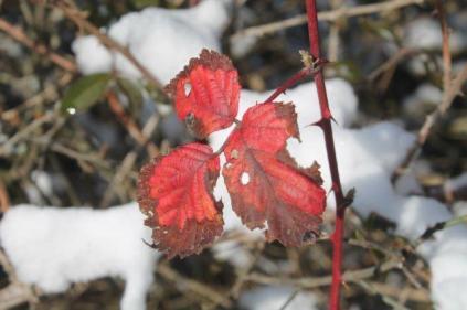 vertine neve 26 febbraio 2018 (62)