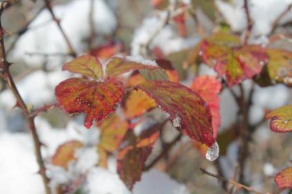 vertine neve 26 febbraio 2018 (63)
