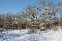vertine neve 26 febbraio 2018 (9)