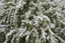 vertine nevicata 25 febbraio 2018 (12)