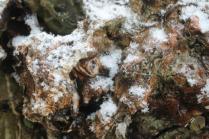 vertine nevicata 25 febbraio 2018 (14)