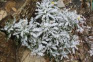 vertine nevicata 25 febbraio 2018 (3)