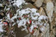 vertine nevicata 25 febbraio 2018 (4)