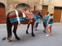 cavallo-dellonda1