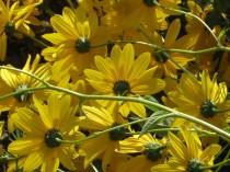 fiore-di-tartufo