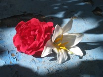 fiori-di-giugno-3