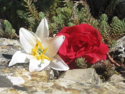 fiori-di-giugno-4