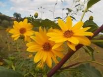 fiori-di-settembre-11