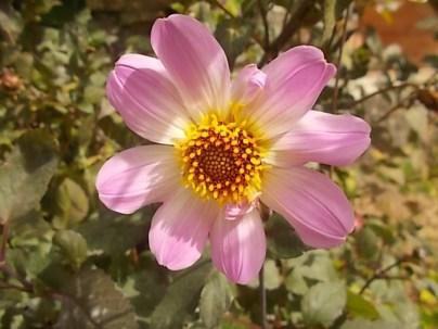 fiori-di-settembre-91