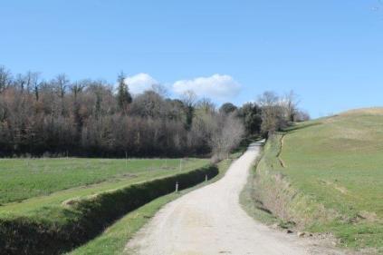 la strada delle primule selvatiche e delle violette (4)