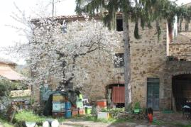 olena di barberino val d'elsa (14)