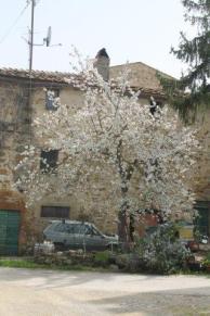 olena di barberino val d'elsa (2)