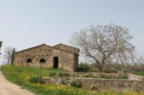 olena di barberino val d'elsa (5)