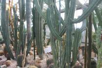 piante grasse giardino sottovico, alessandro e le opere di eugenio romano (10)