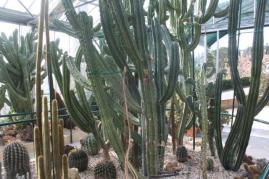 piante grasse giardino sottovico, alessandro e le opere di eugenio romano (14)