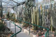 piante grasse giardino sottovico, alessandro e le opere di eugenio romano (20)