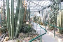 piante grasse giardino sottovico, alessandro e le opere di eugenio romano (21)