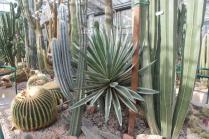 piante grasse giardino sottovico, alessandro e le opere di eugenio romano (23)