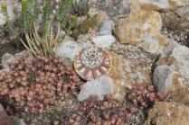 piante grasse giardino sottovico, alessandro e le opere di eugenio romano (35)