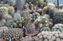 piante grasse giardino sottovico, alessandro e le opere di eugenio romano (40)