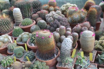 piante grasse giardino sottovico, alessandro e le opere di eugenio romano (44)