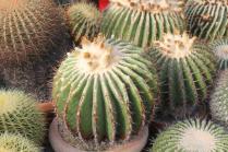 piante grasse giardino sottovico, alessandro e le opere di eugenio romano (46)