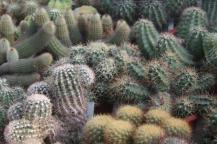piante grasse giardino sottovico, alessandro e le opere di eugenio romano (47)