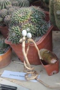 piante grasse giardino sottovico, alessandro e le opere di eugenio romano (49)