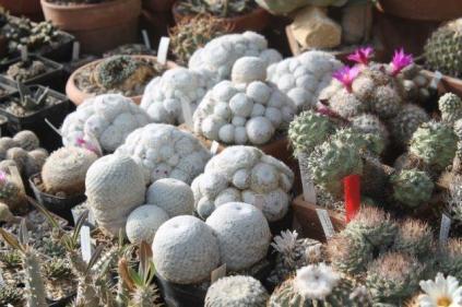 piante grasse giardino sottovico, alessandro e le opere di eugenio romano (57)