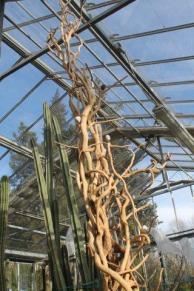 piante grasse giardino sottovico, alessandro e le opere di eugenio romano (68)