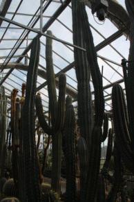 piante grasse giardino sottovico, alessandro e le opere di eugenio romano (77)