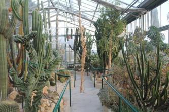 piante grasse giardino sottovico, alessandro e le opere di eugenio romano (83)