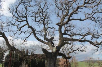 quercia delle checche pienza, le cure (2)