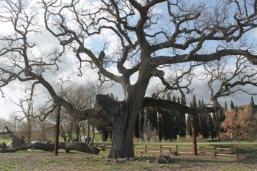 quercia delle checche pienza, le cure (3)