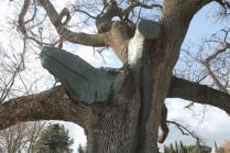 quercia delle checche pienza, le cure (4)