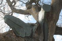 quercia delle checche pienza, le cure (5)