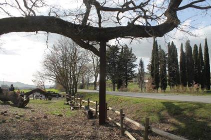 quercia delle checche pienza, le cure (6)